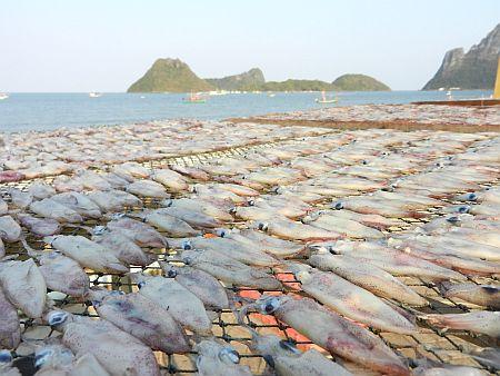 tintenfisch essen gefährlich